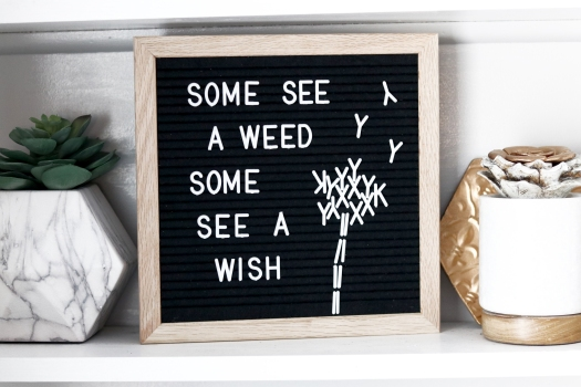letterboard letter board quote dandelion some see a weed some see a wish